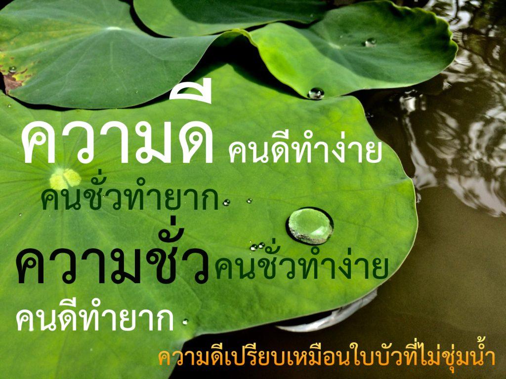 ความดีคนดีทำง่าย, ความดี, คนดี, คนชั่ว, ทำง่าย, ทำยาก, ความชั่ว, ใบบัว, หยดน้ำ, หยดน้ำบนใบบัว, บัวที่ไม่ชุ่มน้ำ, lotus, Droplet, Lotus leaf