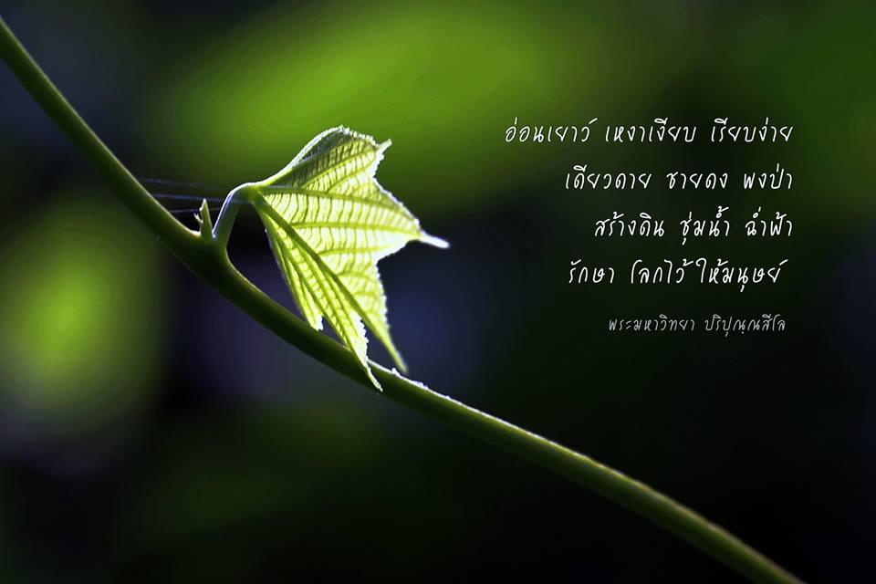 ใบแรกอ่อน, อ่อนเยาว์, สีเขียว, ใบไม้, ใบไม้สีเขียวอ่อน, ใบไม้สีเขียว, ป่า, เถาวัลย์