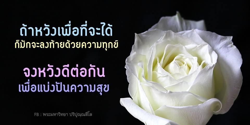 ถ้าหวังเพื่อที่จะได้ ก็มักจะลงท้ายด้วยความทุกข์, ความทุกข์, ความสุข, หวังดี, ดอกกุหลาบ, กุหลาบขาว