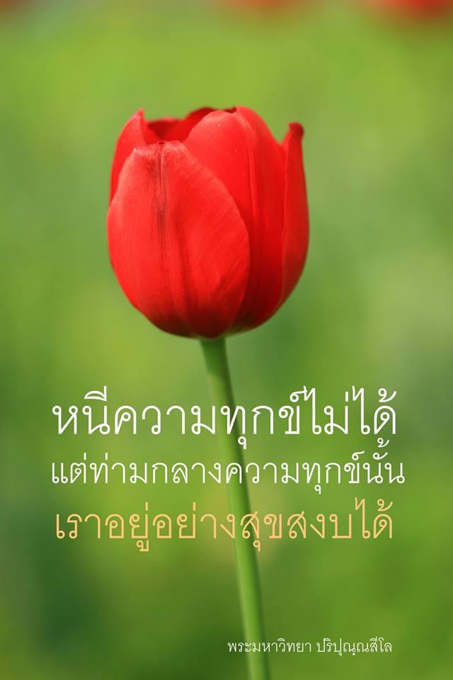 ความทุกข์, หนีความทุกข์, หนทาง, หนทางไม่ได้โรยด้วยกลีบกุหลาบเสมอไป, สุขสงบ, ทิวหลิบ, ดอกทิวหลิบ, ดอกไม้สีแดง, ดอกทิวหลิบแดง